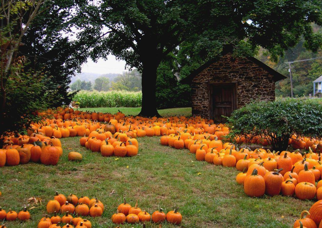 laboitedallumetttes-pumpkin-farm-citrouille-potiron-soupe-orange-ferme-amerique